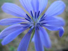 Purple Amazing Nature, Colours, Purple, Plants, Plant, Viola, Planets
