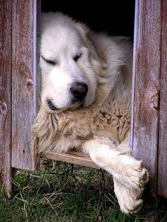 .i hope this is not your home. You are so beautiful. If you were my dear pet you would be in my home.