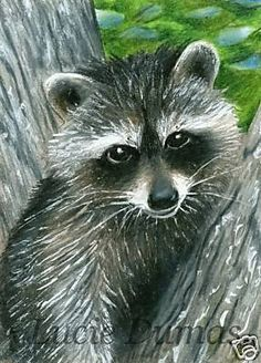 ACEO art print Raccoon #7 by L.Dumas