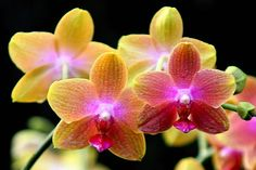orchids pictures | Jo Nijenhuis › Portfolio › Orchids so Wonderful