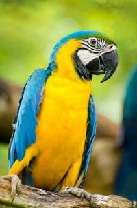 Discover the Jamaica Swamp Safari Village and the historic town of Falmouth…
