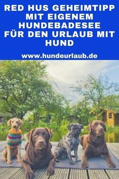 Das Red Hus – unser Geheimtipp mit eigenem Hundebadesee für den Urlaub mit Hund The Red Hus – our insider tip with its own dog bathing lake for the holiday with dog Cute Funny Dogs, Dog Travel, Pet Rabbit, Dog Memes, Dog Quotes, Exotic Pets, Beautiful Dogs, Animal Shelter, Dog Pictures