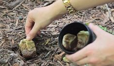Used tea bags are a gardener's secret weapon! Your How-To: Toss them into the compost, toss them into holes (as shown in the photo below), or sprinkle the dried tea leaves into your soil. Organic Gardening, Gardening Tips, Vegetable Gardening, Gardening Zones, Garden Soil, Keep Bugs Away, Used Tea Bags, Plantation, Growing Plants