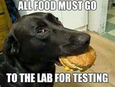 All food must go to the lab for testing!