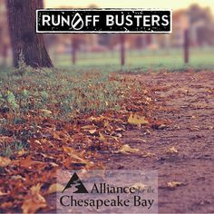 #RunOffBusters has suggestions on how to make use of the windfall of golden leaves in your yard. More here: http://stormwater.allianceforthebay.org/2015/10/a-wind-fall-for-your-yard/