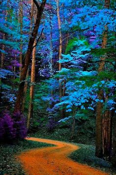 trees path Great Smoky Mountains National Park, Tennessee been several times bt not this path!blue trees path Great Smoky Mountains National Park, Tennessee been several times bt not this path! Great Smoky Mountains, Oh The Places You'll Go, Places To Travel, Foto Nature, Nature Nature, Nature Tree, Nature Animals, Beautiful Places, Beautiful Pictures