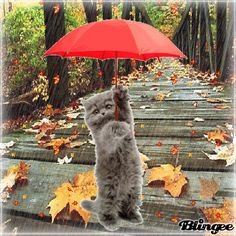 Rainy Weather, Rainy Days, Gifs, Cat 2, Dog Cat, Rain Pictures, Belly Dancing Classes, Autumn Rain, Beautiful Gif