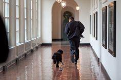 """Voller Energie: Barack Obama rennt im März 2009 mit dem Familienhund """"Bo"""" im..."""