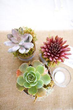 succulent centerpieces  Photography By / hannahperssonphoto.com, Floral Design By / sagefloralstudio.com