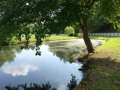 704-816-0526 Charlotte NC 864-381-7663 Greenville SC and Asheville NC #pondmanagement http://www.platinumlakemanagement.com  Algae, aquatic weeds, chara, hydrilla/ elodea, naiad, coontail, american pondweed, cattails, duckweed, southeastern pond management, fish pond management, farm pond management, lake pond management, large pond management, pond maintenance