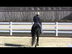 The first ride outside on a warmblood stallion (part 1)