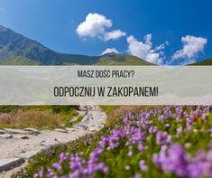 TWW Apartamenty zapraszają na Majówkę w Zakopanem! :) #urlop #majówka #Zakopane