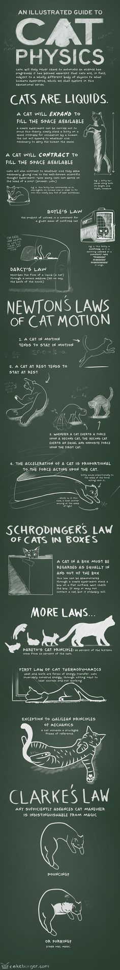 Cat Physics Infographic #cats #pet #science