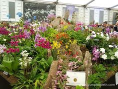 Kevock Garden Plants displaying their Gold Medal at The RHS Chelsea Flower Show 2016.