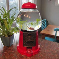 Gumball Machine Fish Tank.... SO FREIKING COOOLLLL.