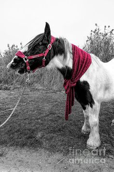 Gypsy Horse, Colour Images, Thats Not My, Horses, Black And White, News, Artwork, Work Of Art, Black N White