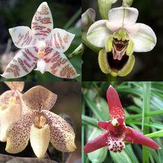 Es una obviedad decir en este blog que nos encantan las plantas, lo que no es tan obvio es la importancia y el beneficio que tienen para nuestra vida. Está claro que a todos nos gustan las plantas,…
