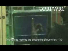 Chimpanzees can far outperform humans in some mental tasks, including rapidly memorising and recalling numbers, Japanese scientists have shown.  At the American Association for the Advancement of Science annual meeting, Tetsuro Matsuzawa, of Kyoto University's Primate Research Institute, showed remarkable videos of chimpanzees displaying mental dexterity that would be way beyond most people.