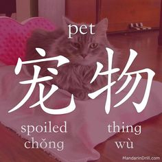 宠物 PET Haha that's hilarious. Share it to your friends! #pet #cat #rebus #chinese #china