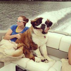 St. Bernard + boat= so amazingly cute!!!!!!!!