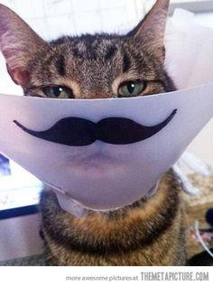 The cone just got funnier… @Andrea Velasquez... I think Ted and Soph need this. @Jacqueline Ryan: for my coney!!!