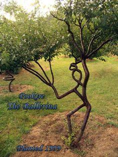 Pooktree - nietypowe drzewa hodowane przez Petera Cooka i Becky Northey. Chcielibyście mieć takie w ogrodzie? :)