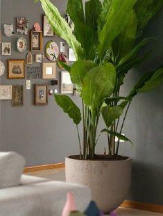 27- O cróton é uma das plantas para dentro House Plants Decor, Plant Decor, Potted Plants, Indoor Plants, Dinner Room, Sweet Home Alabama, Interior Plants, Garden Landscaping, Planting Flowers