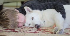 This is an amazing rescue of a beautiful white German shepherd who was going through a very rough time. Gemma suffered from demodectic mange. Shelter Dogs, Rescue Dogs, Animal Rescue, Animals And Pets, Cute Animals, Stories That Will Make You Cry, Save A Dog, Sick Dog, Poor Dog