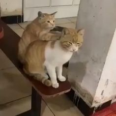 Funny Cute Cats, Cute Cats And Kittens, Cute Funny Animals, Kittens Cutest, Cute Animal Videos, Funny Animal Pictures, Beautiful Cats, Animals Beautiful, Cute Little Animals