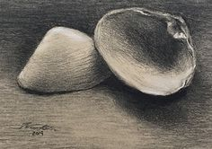 "Jodie Kain | Backlit Quahog Shells | charcoal & chalk on laid paper | 6x9"" approx. 