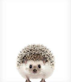 Hedgehog print Baby animal prints The Crown Prints Woodland