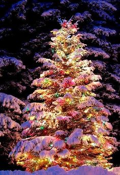 A Christmas tree outdoors in Seward, Alaska.