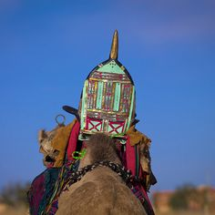 Camel with Tuareg saddle in Libya East Africa, North Africa, Tuareg People, Bactrian Camel, Eric Lafforgue, Camels, World Cultures, Animal Kingdom, Egypt