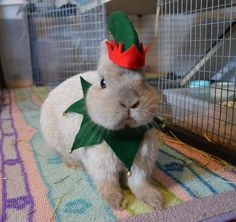 Christmas elf costume for small animal van ToffeeCrafts op Etsy