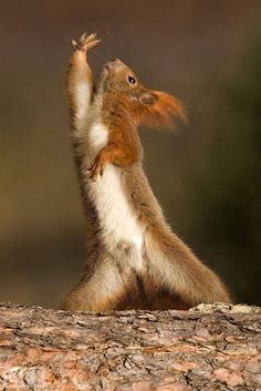 Dancing With the Squirrels ; A squirrel in Opole, Poland, is struck with disco fever. [One of the Life 2010 pictures of the year]
