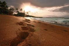 Beautiful Hawaiian Islands