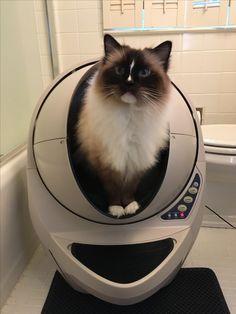 best self cleaning cat litter box litter robot iii youtube litter