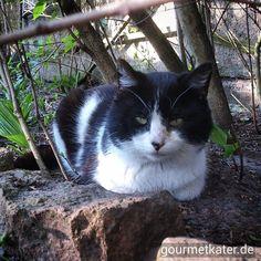 Mein Freund Teddi #cat #katze #tier #animal #gourmetkater