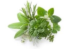 Click here to find out which Herbs Cleanse and Detoxify Your Body.