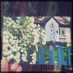 2013-07-18 #Postcard from #Russia (RU-1791726) via #postcrossing #flower #Padgram