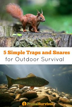 5 Ridiculously Simple Animal Traps and Snares for Outdoor Survival. When it comes to outdoor survival, eating is one of your last concerns. Humans can go up to 3 weeks without food, but only 3 days without water and just a few hours without shelter in extreme weather conditions.