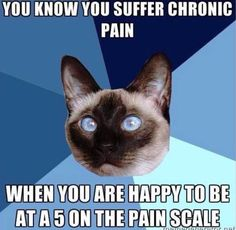 Chronic Illness Cat - Chronic Illness - EDS, Fibromyalgia, Gastroparesis, Autoimmune Disease Rheumatische Arthritis, Psoriatic Arthritis, Ulcerative Colitis, Autoimmune Disease, Crohn's Disease, Kidney Disease, Rare Disease, Thyroid Disease, Thyroid Cancer