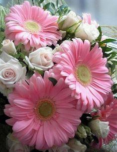 Gerbera Flower, Flower Art, Gerbera Daisies, Exotic Flowers, Pretty Flowers, Wild Flowers, Happy Weekend, Sd Card, Daisy