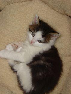 cute kitten Bosco #catteemission