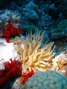 Arrecifes de coral - México, novedades y realidades