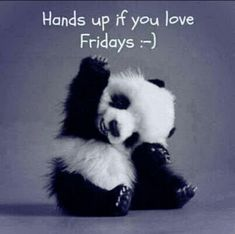 For those who know me well, they know I can't handle the cuteness of baby animals. So when I saw a baby panda picture that was happy about it being Friday, I had to post it. It's Friday. It's a 3 day weekend. Today is a good day. Enjoy the little things. Friday Quotes Humor, Happy Friday Quotes, Now Quotes, Weekend Quotes, Happy Quotes, Funny Quotes, Funny Friday, Friday Memes, Happiness Quotes