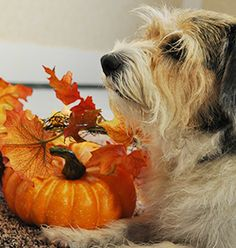 Halloween Hazards for your pet