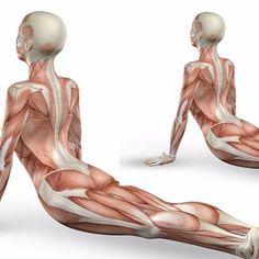 Упражнения для улучения кровообращение органов малого таза