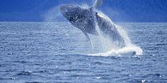 Glacier & Wildlife Cruises | Visit Anchorage