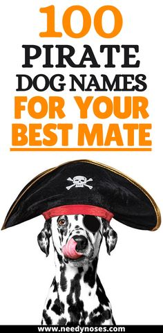 100 pirate dog names to match your best mate. Explore the seas and adventure the world with the perfect, hearty name for your pal! #piratedognames #dognames #dognameideas